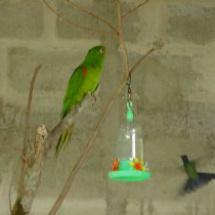 Papagaio e Beija-Flor